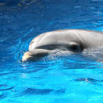 dolphinfreedreamstime